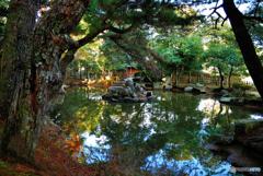 晩秋の庭園