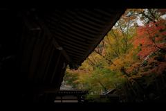 秋のぶらり京都 14