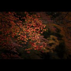 秋のぶらり京都 17
