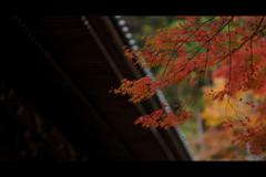 秋のぶらり京都 15