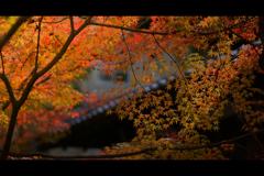 秋のぶらり京都 16
