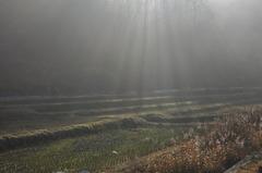 谷あいの耕作地~初冬~