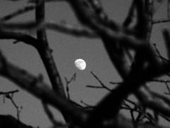 お月様3。
