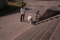 お父さんと散歩のココさん