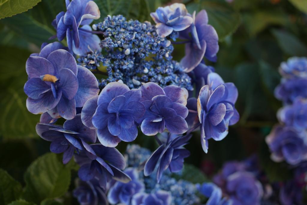 ココさん所の花