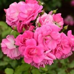 bouquet 3