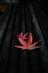 秋色スナップ