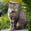 岩の上の猫