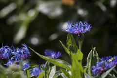 煌く花たち