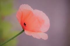 花びらに模様が、、、