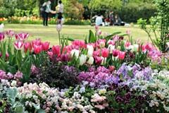 穏かな春の日に
