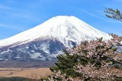 富士山と桜と