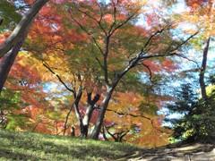 殿ヶ谷戸庭園の秋2