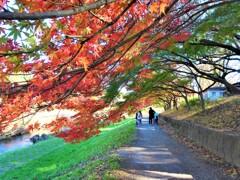 武蔵野の秋