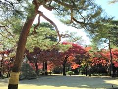 殿ヶ谷戸庭園の秋1