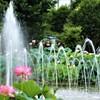 蓮の花と噴水
