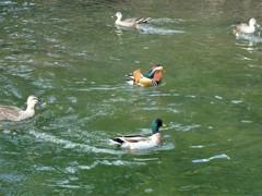 姿見の池にて2