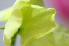 花びら一枚