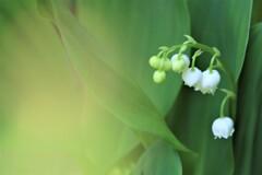 幸せを呼ぶ花
