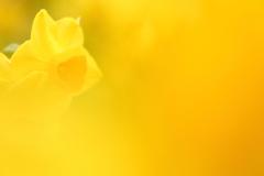 Yellow X Yellow