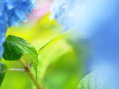 雨の恵み、そして。