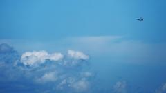 いつもの空にイーグル