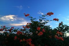 朝、空を見て...