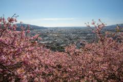 春色の季節