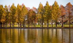紅葉 水元公園