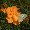 蝶はなぜ花にとまるのか?