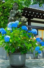 お地蔵さんも紫陽花が綺麗に咲いて喜んでいます(^^)