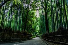 嵐山 竹林の道 京都
