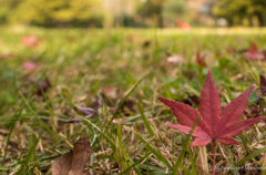 小さい秋見つけたよ