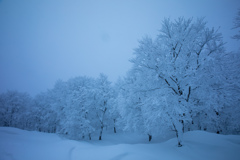 蔵王の樹氷を撮りたくて…