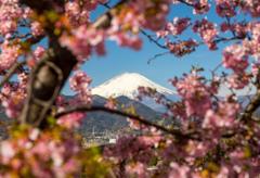 河津桜に囲まれて…