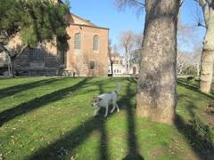 トプカプ宮殿の犬