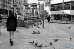 大阪駅前第三ビルの前の鳩