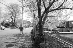 桜2020(モノクロ)