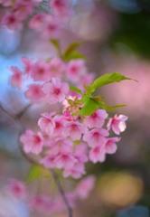 春告げる花2