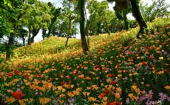 ゆり咲く丘
