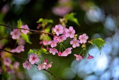 春告げる花3