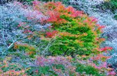 秋の共演1
