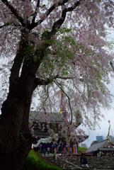 増上寺にて2