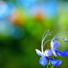 春呼ぶ蝶のように