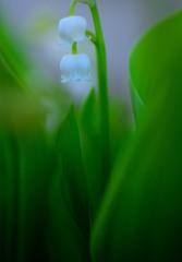 春告げる小花3