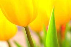春はそこまで4
