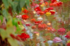 流れる秋色