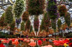 花がいっぱい!