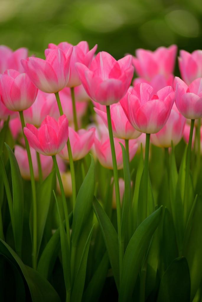 一足お先に春の花1