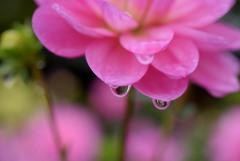 秋雨の日2